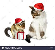 funny christmas pet funny squirrel and cat with santa hat stock