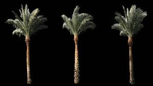 2 blowing on the wind beautiful green size real tropical palm