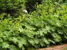 Pflanzen Fur Japanischen Garten 33 Blumensorten Für Den Bauerngarten Freshouse