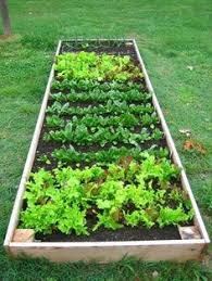 9 all natural ways to keep pests out of your garden fresh