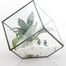 online get cheap plants terrarium aliexpress com alibaba group