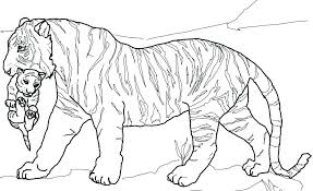 coloring page tigers coloring pages tiger tiger cub coloring pages tiger cub coloring
