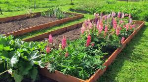 seedlings do better than seeds in no dig garden gardening tips