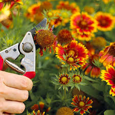 Low Maintenance Plants And Flowers - make a low maintenance backyard