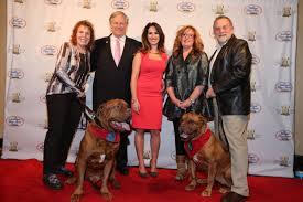 afghan hound national dog show meet the national dog show u0027s dedicated ambassadors american