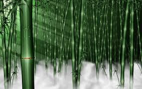 forest wallpaper for room wallpapersafari forest wallpaper for room 2015 best auto reviews
