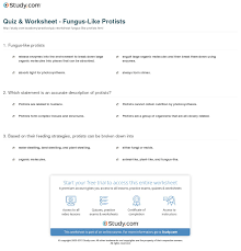 quiz u0026 worksheet fungus like protists study com