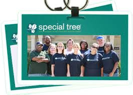 meet your team special tree