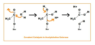 structural biochemistry catalytic strategies covalent catalysis