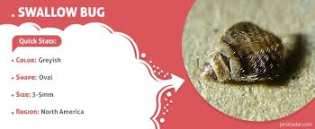 Can Bed Bugs Survive Outside 9 Bugs That Look Like Bed Bugs Pestradar
