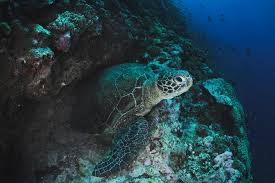 climate change will test turtles u0027 mettle