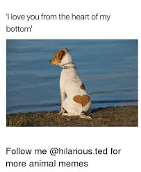 Funny Love You Meme - i love you from the heart of my bottom follow me for more animal