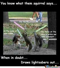 Squirrel Nuts Meme - 35 very funny squirrel meme pictures and images