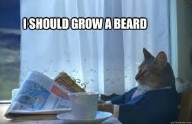 Cat Beard Meme - i should grow a beard sophisticated cat quickmeme