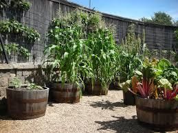470 best vegetable gardens images on pinterest vegetables garden