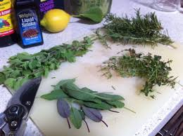 thanksgiving herbs vynnie mcdaniels better living through gardening page 2