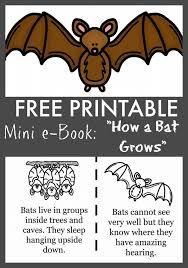 25 bat craft ideas toilet paper roll bat
