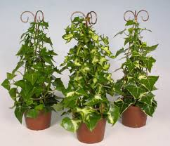 indoor moss plants