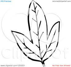 fall leaves clipart black and white clipart panda free clipart