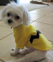 Halloween Costume Dog Dog Costume Halloween Costume Small Dog Pet Costume