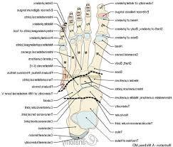 Anatomy Of A Foot Anatomy Of Knee Joint Human Anatomy