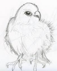 pencil sketch animals by phebron on deviantart