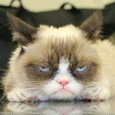 Grumpy Face Meme - 73 best grumpy cat images on pinterest funny things chistes