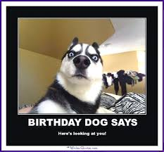 Birthday Meme Funny - happy birthday memes with funny cats dogs and cute animals