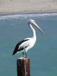 pelican decorations to complete your coastal or themed home