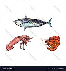 sketch lobster tuna fish squid isolated royalty free vector