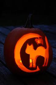 cat halloween picture free images record light interior dark orange cat