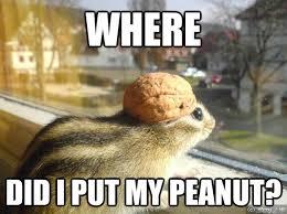 Adventure Meme - where did i put my peanut adventure chipmunk quickmeme