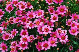 pretty flower garden ideas flower garden design ideas pictures best idea garden