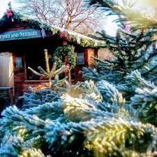 christmas tree oh christmas tree where to buy u0027em in london