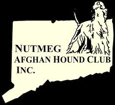 afghan hound judging list afghan hound club inc