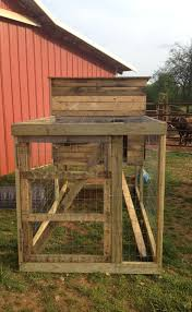southern sunflower seeds backyard chicken coop