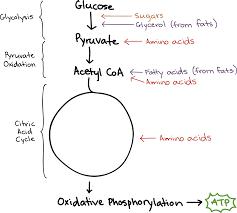 lactic acid fermentation video khan academy