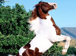 a horse of a different color the wide and wonderful world of