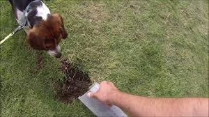 how to stop dogs digging up the garden youtube