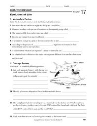 printables evolution worksheet ronleyba worksheets printables