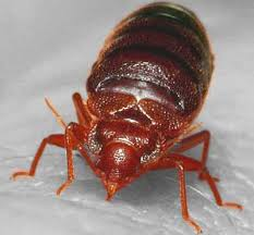 Bed Bug Heat Treatment Cost Estimate by Bed Bug Extermination Cost Inspection And Treatment Costs