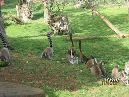Tisch Family Zoological Gardens - הפיל הזכר האסייאתי picture of tisch family zoological gardens