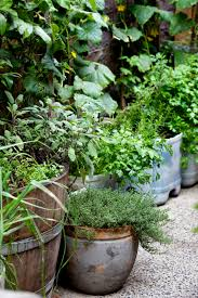 spring tips repotting fertilising citrus edibles in containers