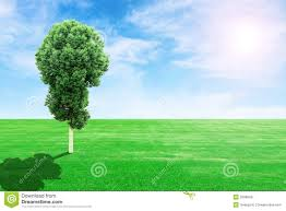 green grass field and tree with sun and sky stock image image of
