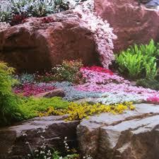 45 best rock gardening images on pinterest gardening plants and