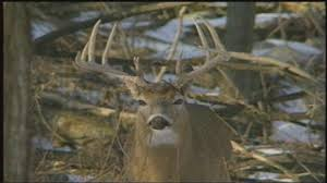 outdoor report it s prime time for archery deer