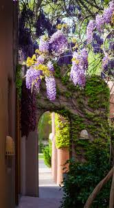 wisteria sinensis australian bush flower 171 best wisteria lane images on pinterest beautiful flowers