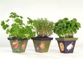 erba cipollina in vaso giardinaggio estivo come coltivare le piante aromatiche www