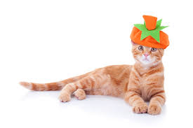 3 ideas to help your cat cope with thanksgiving stress catster