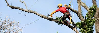 allen sons tree service in parkville md local coupons